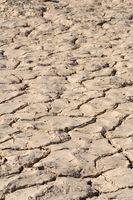 ¿Qué tipo de césped que crece mejor en suelos de arcilla roja?