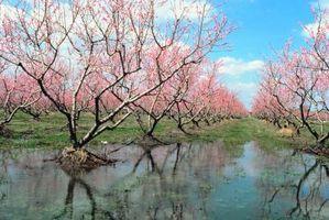 Flores y árboles en Central Jersey