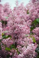 ¿Es bueno podar flores arbustos y árboles en el otoño?