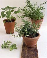 Cultivar un huerto en un balcón de apartamento pequeño