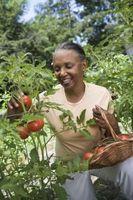 Tipos de tomate jardín