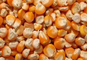 Partes de una estructura de grano de semilla de maíz