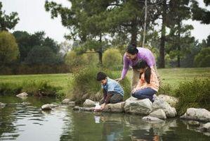 Cómo descremada musgo de un gran estanque