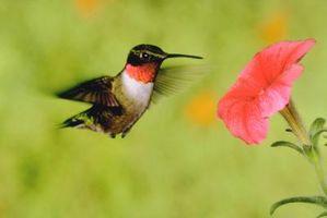Lugares efectivos para los alimentadores del colibrí