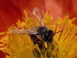 Cómo matar las abejas y otros insectos voladores con productos para el hogar