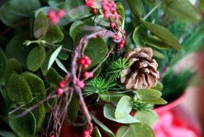 Plantas de la baya en arreglos florales