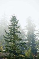 Hongo del chancro en árboles