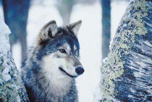 Cómo decorar con lobos en el dormitorio
