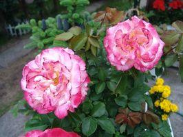 Cómo plantar flores perennes con una barrera de maleza