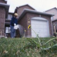 ¿Qué tan pronto hace hierba verde para arriba con almacenamiento Weed & Feed?