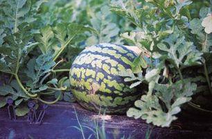 Fertilizantes naturales para jardinería