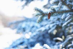 Al cortar árboles de abeto pino