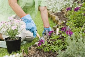 Tipos de suelo para cultivar plantas