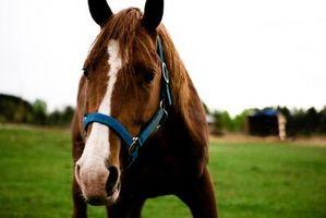 ¿Puede utilizar el estiércol de caballo para césped nuevo?