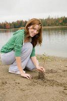¿Tirar las malezas matar la raíz?