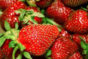 ¿Cómo plantar fresas en el interior