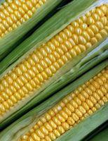 Aplicaciones de vinaza de maíz