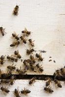 ¿Cómo pasar las abejas de mi caja de aspersión