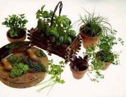 Creaciones de jardín de hierbas