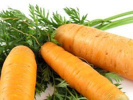 Prevención de la mosca de zanahoria