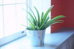 Planta insectos y arañas