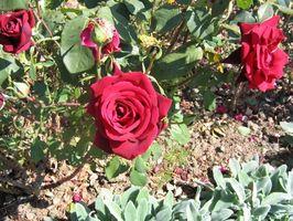 Tipos de flores al aire libre