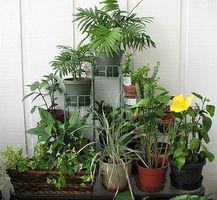 Cómo aumentar la humedad para las plantas de interior