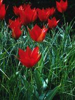 Las mejores plantas de flores rojas para exterior