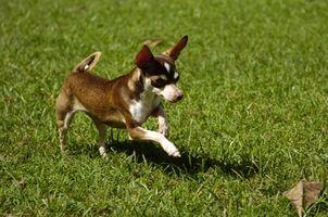 Cómo construir tu propia puerta y puerta para perro