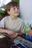 Cómo elegir macetas suelo de un huerto de contenedores