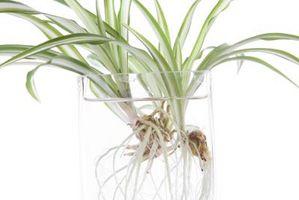 ¿Plantas de la casa pueden quitar monóxido de carbono del aire?
