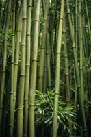 El efecto destructivo del bambú en construcciones