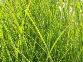 Información sobre malas hierbas y piensos abonos