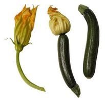 Cómo cultivar calabacines de flores machos y hembras