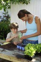 Cómo hacer crecer las semillas con los niños
