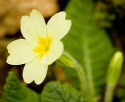 Flores comunes de Nueva Inglaterra