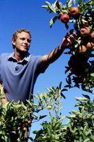 Árboles frutales y suelos ácidos