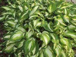 Plantas de sombra para el sur de la Florida
