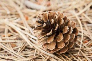 El mejor tipo de rastrillo para agujas de pino y piñas
