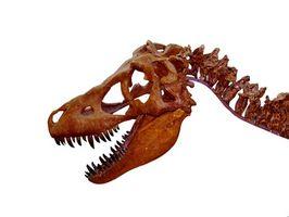Ideas de habitaciones de temática de dinosaurios