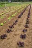 Lo que a la planta para un jardín sostenible