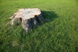 Agentes de descomposición tocón de árbol natural
