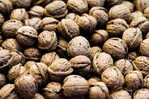 Cómo recoger semillas nuez nueces