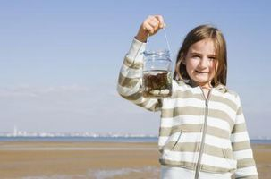 Cómo convertir algas en combustible para un proyecto de Ciencias