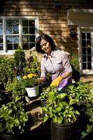 Sistemas de riego para los jardines de contenedor