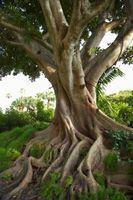 Gusanos de tierra que pueden destruir árboles