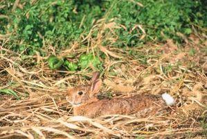 ¿Conejo conejos utilizable para el Control de maleza en un césped?