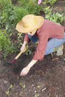 ¿Es yeso mejor para un jardín de cal?