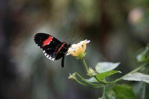 Polinización en las flores