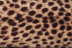 Ideas para pintar un dormitorio con un estampado de Cheetah